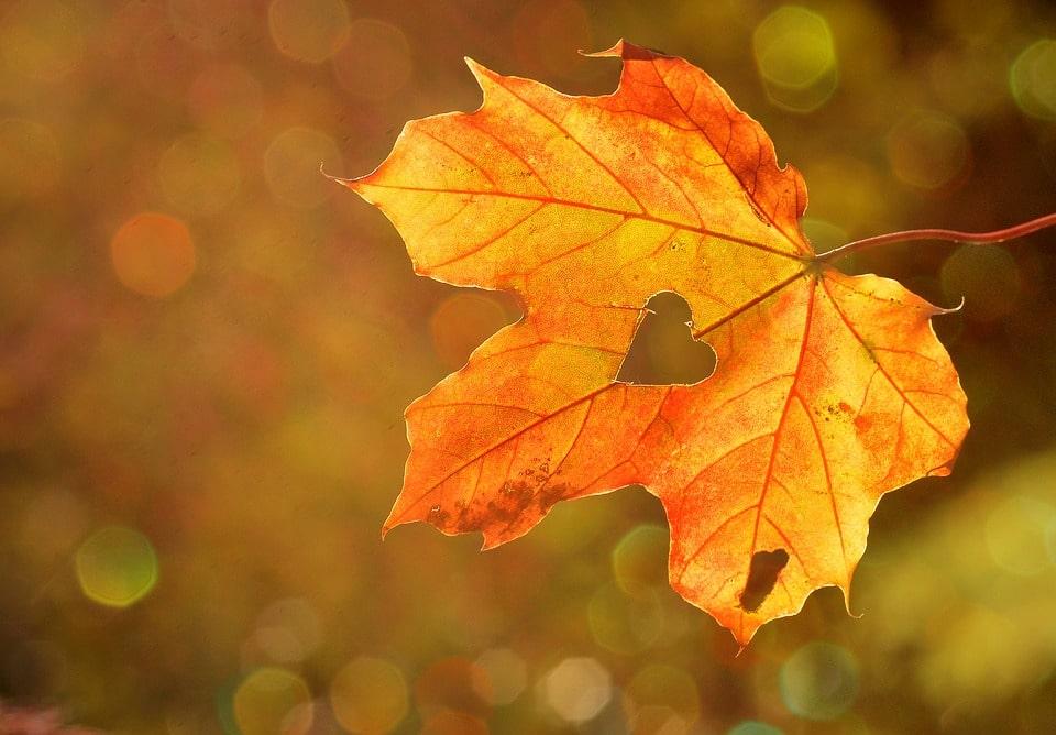 Što nam jesen govori?