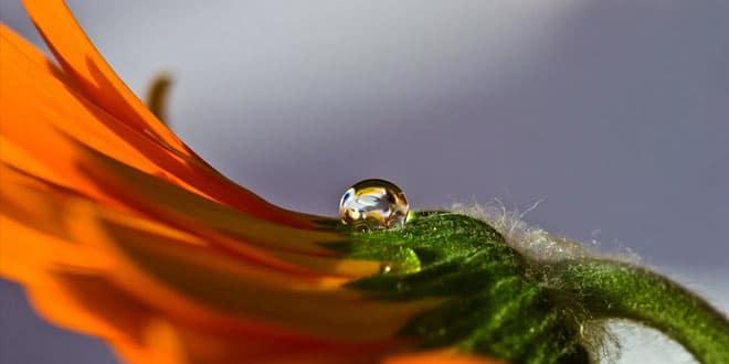 10.11. Zagreb - Predavanje: Hidrolati - slijedeća generacija aromaterapije