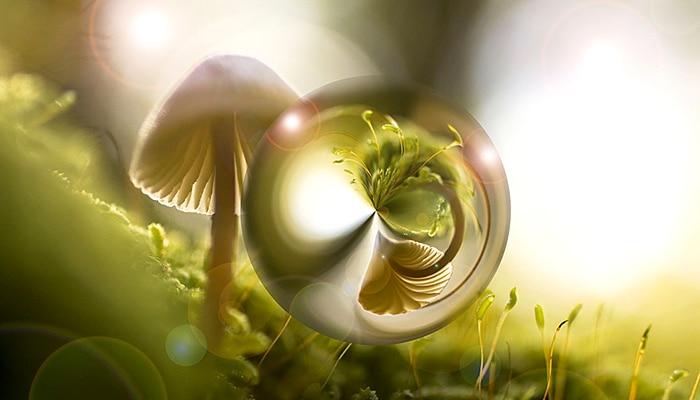 Gljive mogu stvarati kišu i kontrolirati vrijeme