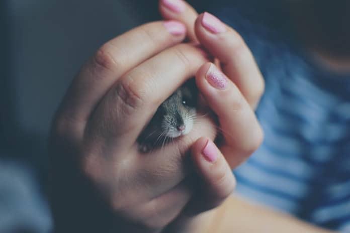Tumač vaših snova: Miš