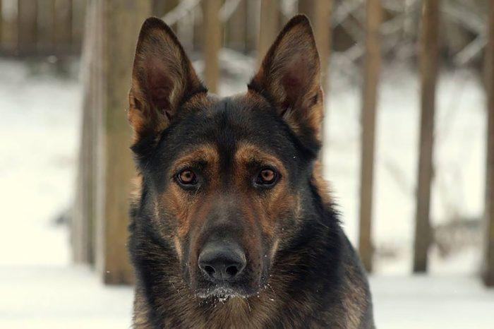 Ljupki i pitomi, dok im neko ne pipne gazdu ili kuću: 10 najboljih pasa zaštitnika!