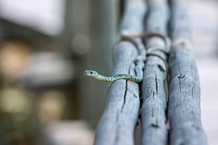 Tumač vaših snova: Sitne zmije