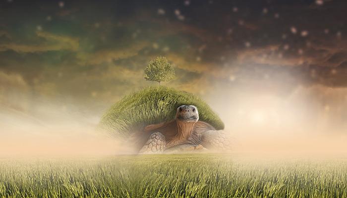 Imaj mentalitet kornjače, a ne zeca: Sporost i staloženost osvajaju utrku života!