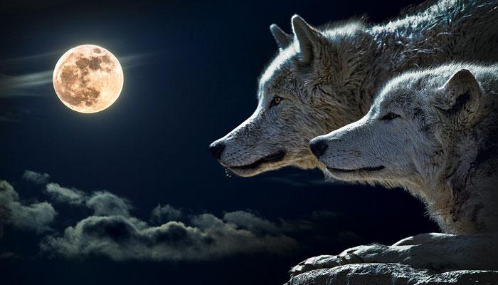 Pripremite se! 21.01. stiže pomrčina superkrvavog, vučjeg Mjeseca - Evo kako će utjecati na svaki znak Zodijaka!