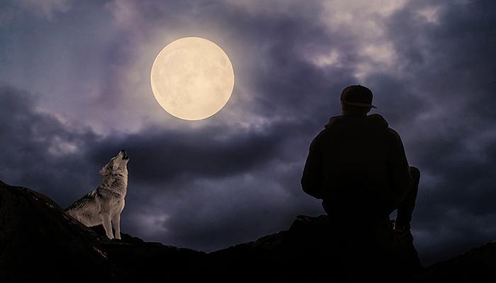 8 znakova da ste vuk u svijetu punom ovaca!