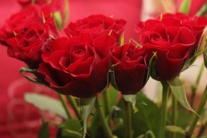 Koje cvijeće pokloniti za useljenje, diplomu, rođendan…