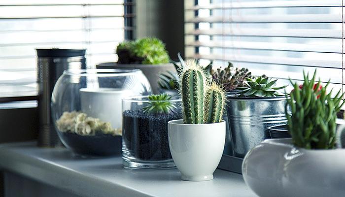 9 biljaka koje nije dobro imati unutar kuće: Narušavaju obiteljsku sreću i negativno utječu na raspoloženje