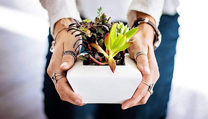 Istraživanje pokazalo: Žene koje se okružuju biljkama žive duže i imaju bolje mentalno zdravlje
