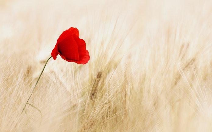 Ljudsko biće je nježan cvijet