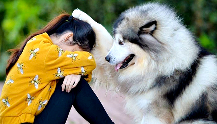 24 psa koji toliko vole svoje ljude, njihov pogled vrijedi milijun riječi!
