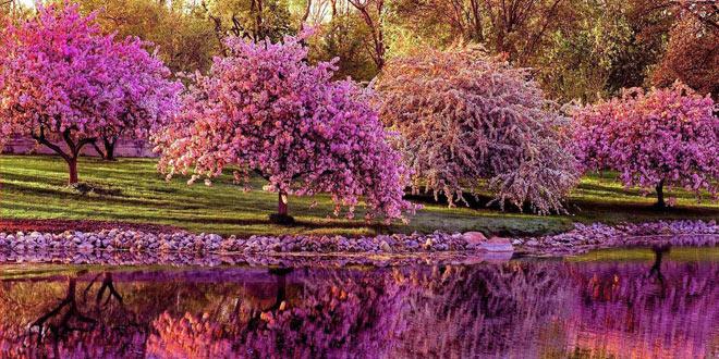 Ayurveda, Aromaterpija i Joga za očuvanje zdravlja i raspoloženja – proljeće