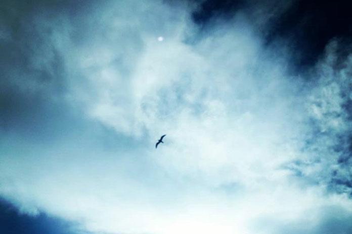 bird tajana cosic