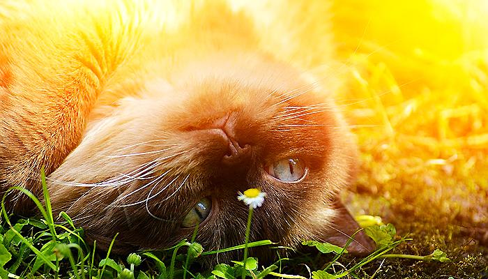 10 životnih lekcija koje možete naučiti od vaše mačke!