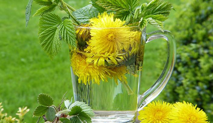 13 razloga da ovog proljeća pijete čaj od maslačka!