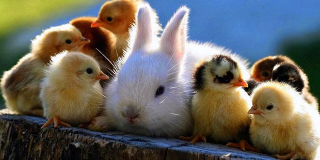 Rad sa životinjama, Otok Krk, ThetaHealing Tečaj®