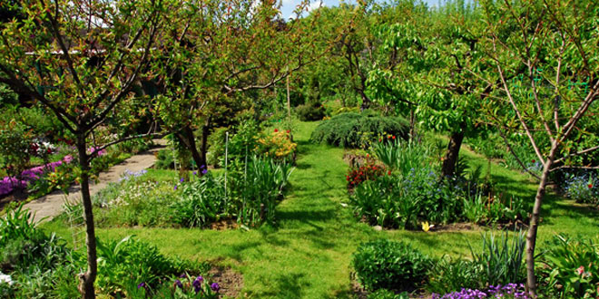 Rad s biljkama, Otok Krk, ThetaHealing Tečaj®