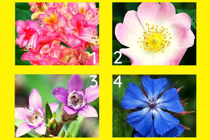 Odaberite jedan cvijet sa slike i pročitajte važnu poruku Vaše duše!