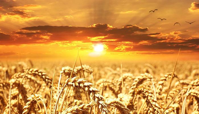 Ususret čarobnom ljetnom solsticiju: 3 mjeseca radosti počinju u petak, 21.06. u 17:54!