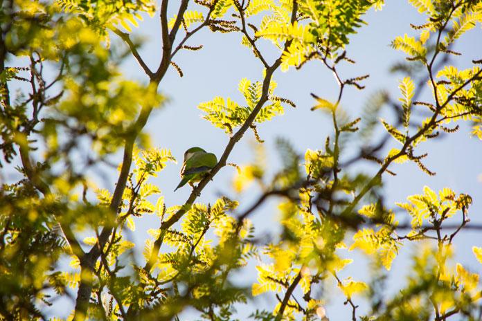 Je li čovjek sličniji ptici ili drvetu?