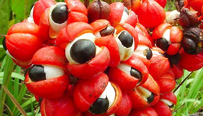 Guarana - Prirodni stimulans uz kojeg se zdravo mršavi