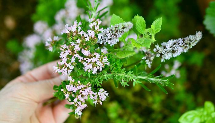 Jedna kap joda spasit će vaš vrt: Od truljenja, gljivičnih infekcija i pepelnice! Evo kako!