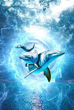 dolphin 4517518 960 720