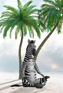 zebra 5201101 960 720