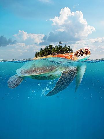 turtle 4379823 960 720