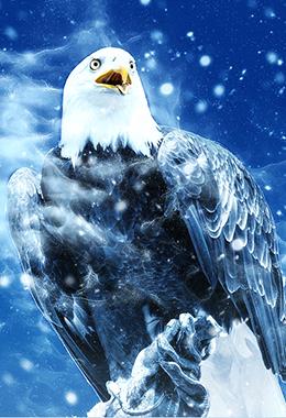 bird 2459962 960 720
