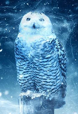 snow owl 1820155 960 720