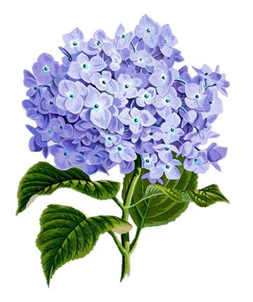 flower 1775377 960 720