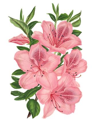 flower 2082041 960 720