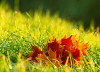 foliage 4574860 1920