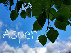 bachove aspen